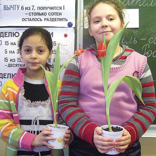 тюльпаны для мам